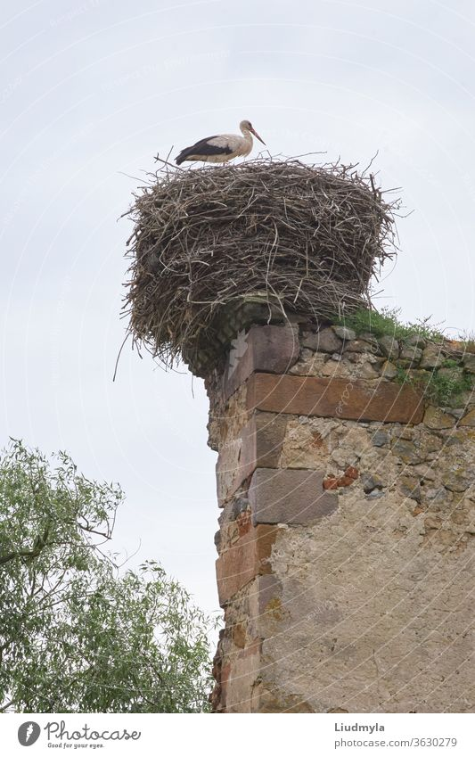 A stork in the nest on top of an old wall day environmental propagation reproduction rural ancient architecture eggs ecology migrating parent chimney branches