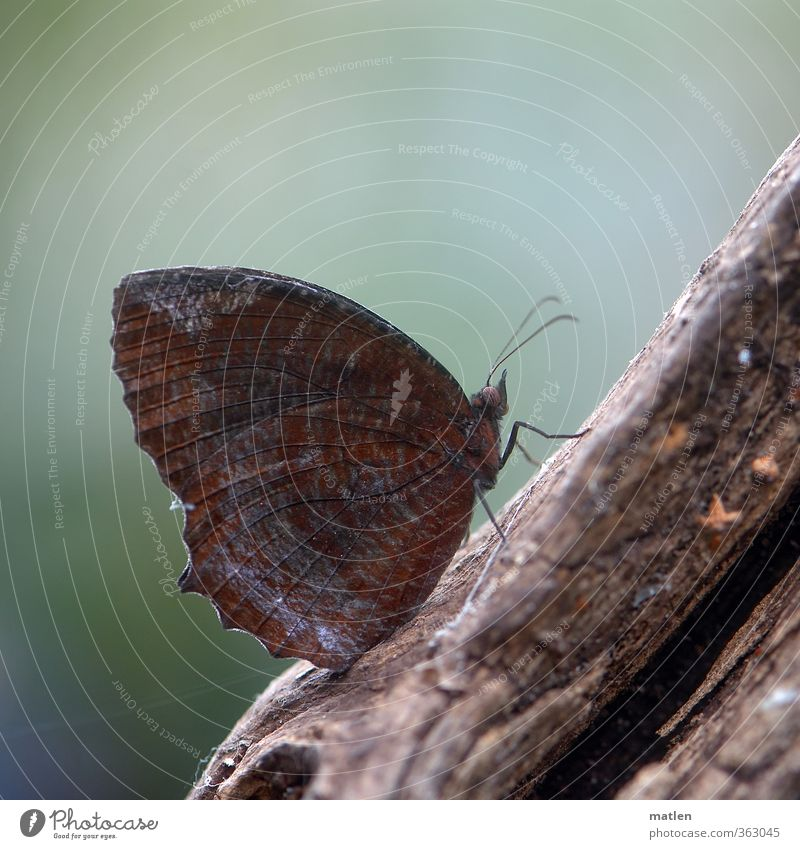 SittingBleiber Animal Butterfly 1 Wood Brown Green rest Branch Colour photo Subdued colour Deserted Day
