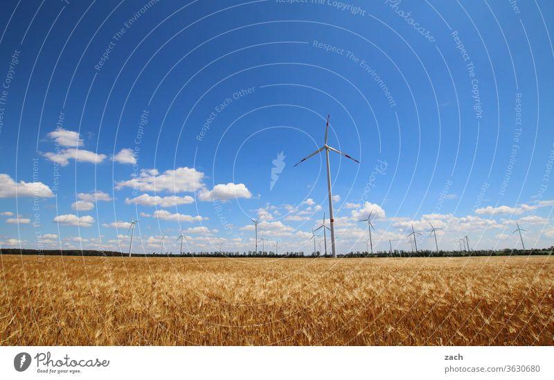 7 days through Brandenburg - Wind machines Field Agriculture acre Barley Barleyfield Grain Grain field Wheat Wheatfield Yellow Blue Sky Blue sky Clouds