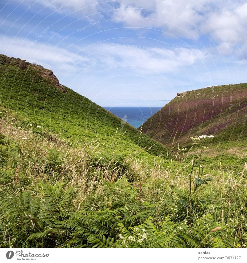 A piece of blue sea between the green landscape under a beautiful sky in summer Cornwall Ocean Landscape Meadow Coast Sky Blue Grass Fern Vantage point
