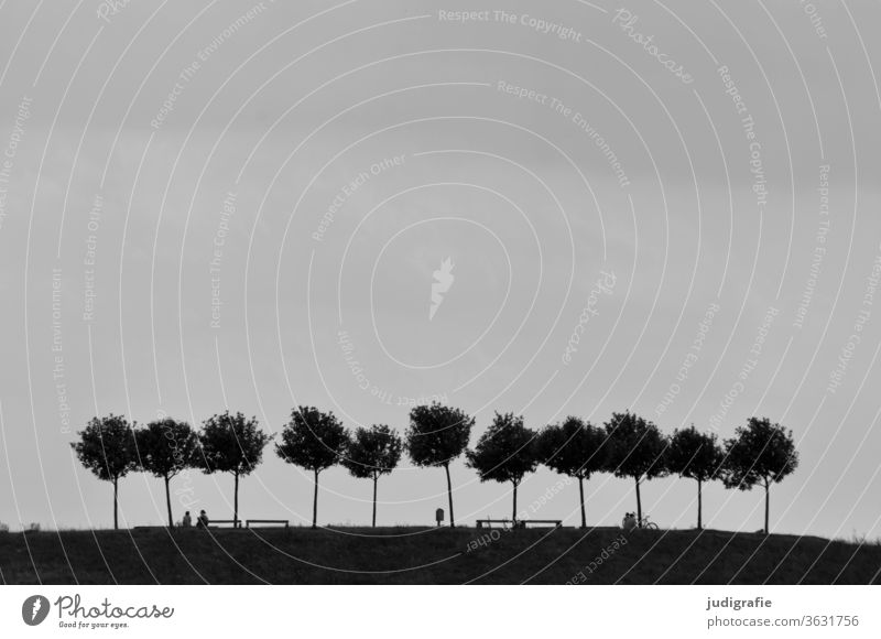 eleven trees in the recreation area Trees on the horizon Nature Relaxation Black & white photo Landscape Exterior shot Day Calm local recreation area Outskirts