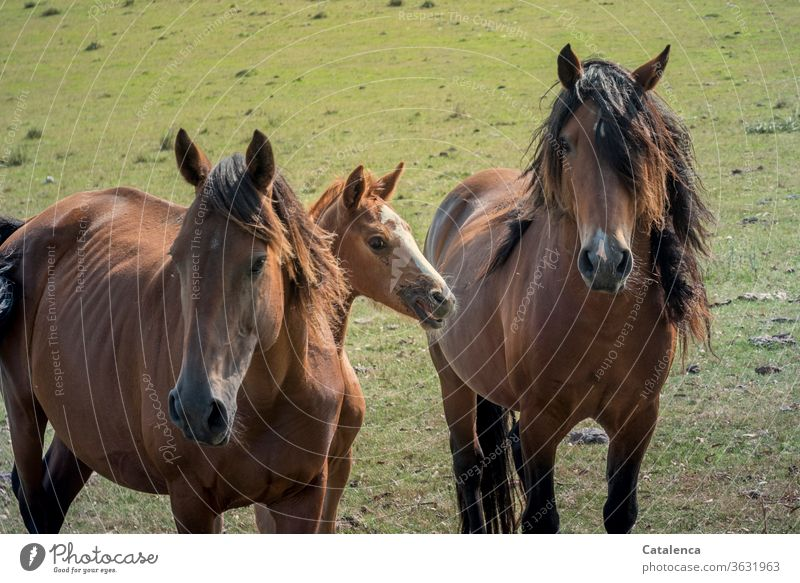 horse family Horse Ride horses Meadow Nature Green Brown Farm animal stallion mare Foal Free Wild Family at the same time