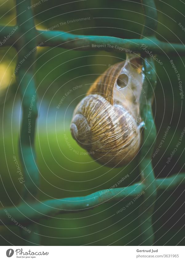 A snail sits on the garden fence flowers Flowers and plants Grass Graz Summer Animal Meadow Fence Nature green Colour photo Exterior shot natural Environment