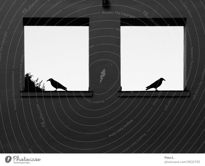 In the windows to the sky the two crows had turned away from each other. Wall (building) Window birds Wall (barrier) Day built