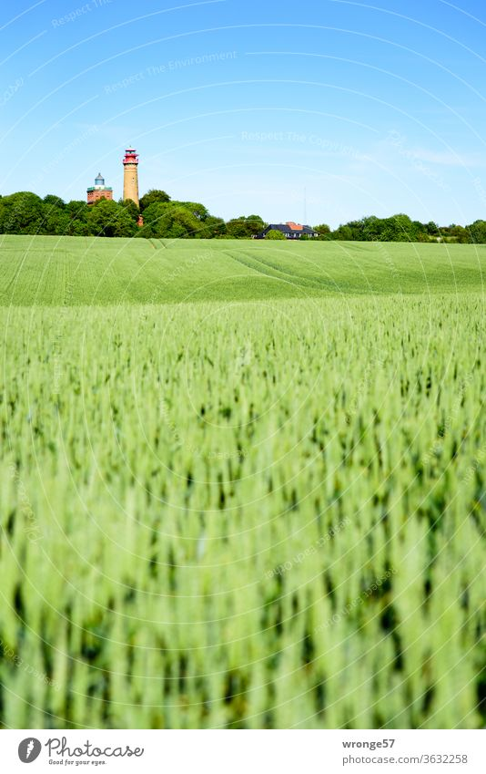 Behind a green wheat field the 2 lighthouses of Cape Arkona look longingly into the distance Lighthouse Cap Arcona island rebuke Baltic Sea Far-off places
