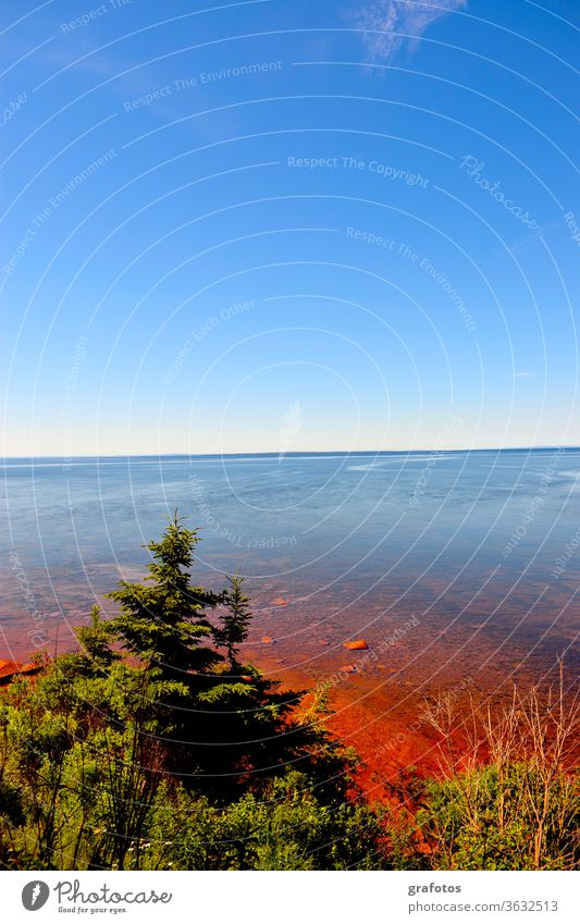 Red Water Prince Edward Island Canada Iceland P.E.I. Exterior shot Colour photo Nature Landscape Deserted Day Environment natural Fir tree Ocean Bay Blue green