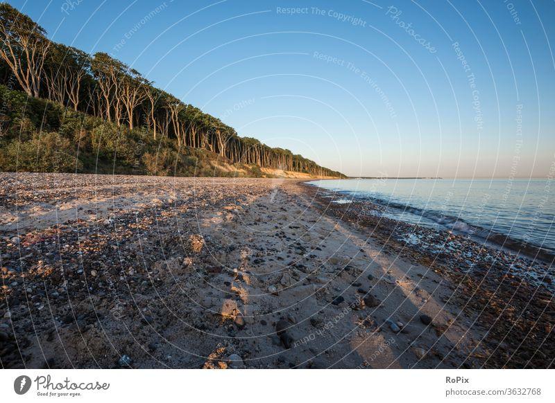 Early morning at the Baltic Sea beach. ghost forest Forest Wind cripple Beach Coast Ocean Sandy beach seashells ocean vacation Nienhagen coastal migration