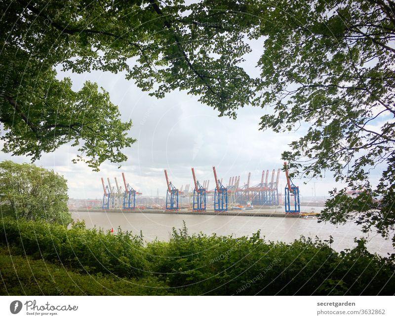 Crane idyll through leaf windows in Hamburg. Wanderlust Twigs and branches container port Building Branches and twigs Container terminal Container ship Shadow