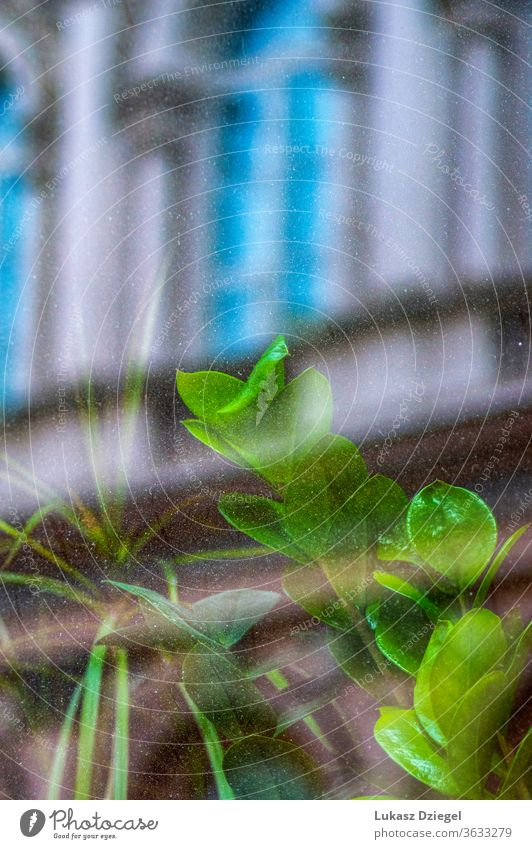 Green plant behind the glass with the reflection of the building streets decorative colorful reflections blossom nature windows fresh abstract window frame