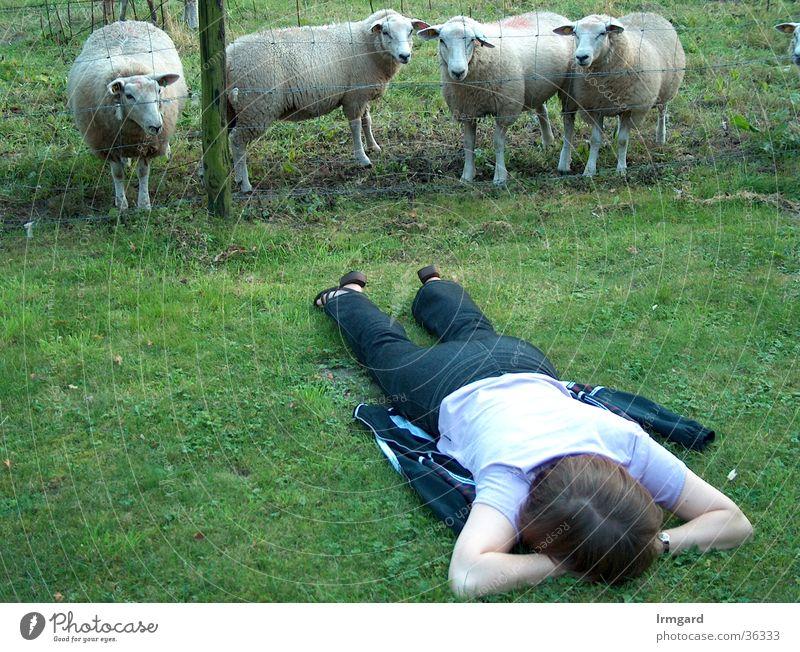 Strange Being Calm Meadow Sheep Summer Break Wellness Woman monitored Nature