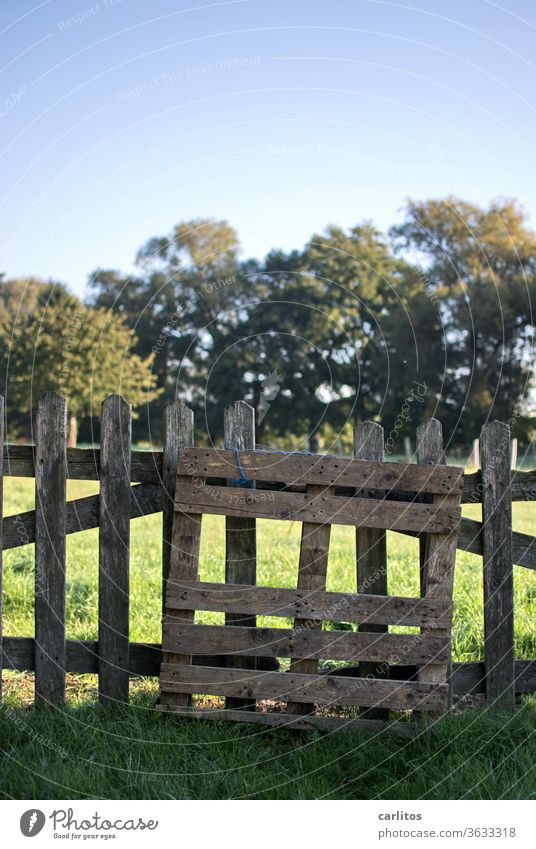 all the slats on the fence? Fence lattice fence Village Meadow huts Landscape Nature green Environment Beautiful weather tree Grass Sunlight Field