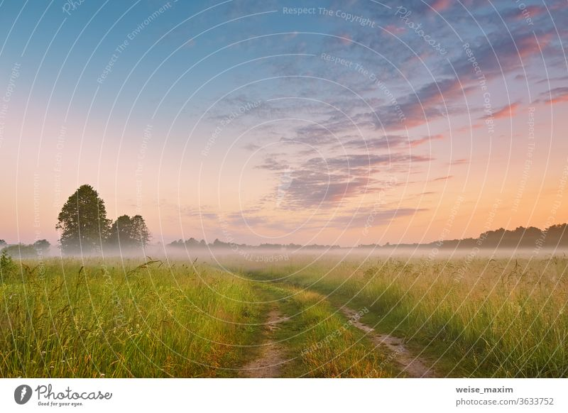Dirt road wild meadow in morning fog. Rural summer landscape in sunrise grass nature dirt sky field mist path sunset autumn countryside sunlight rural dawn tree