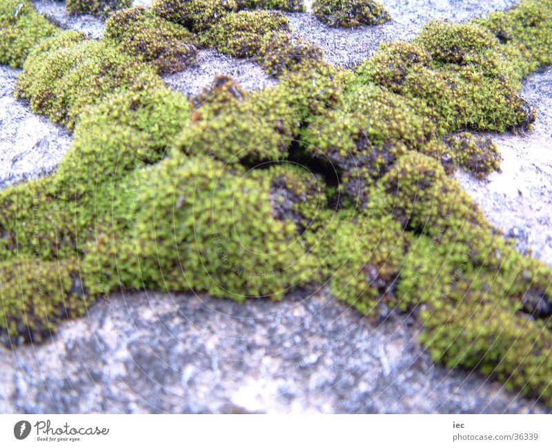 Moss X Roof Weather Time Nature Rain