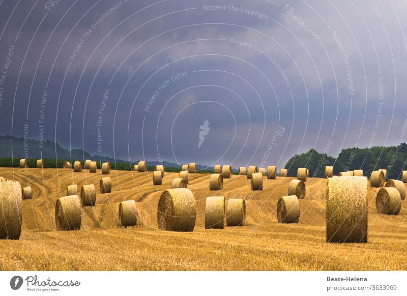 After the harvest, innumerable bales of straw wait to be transported away when a thunderstorm threatens Harvest Hay bale Transport Wait Storm clouds Yield