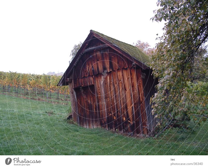Cottage in the vineyards Vineyard Wooden hut Loneliness Federal State of Burgenland Leisure and hobbies Hut