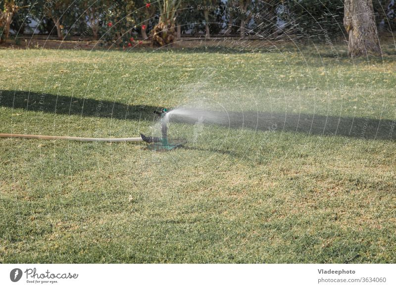 automatic lawn irrigation system in the park. sprinkling the grass and plants agriculture equipment garden green home land landscape meadow moisture nature