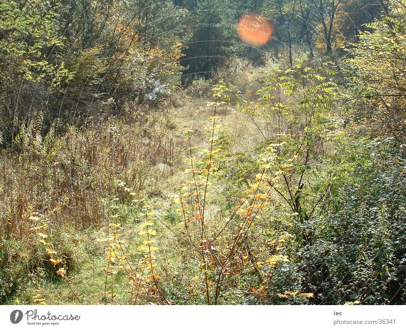 Forest Autumn Meadow Grass Bushes Federal State of Burgenland