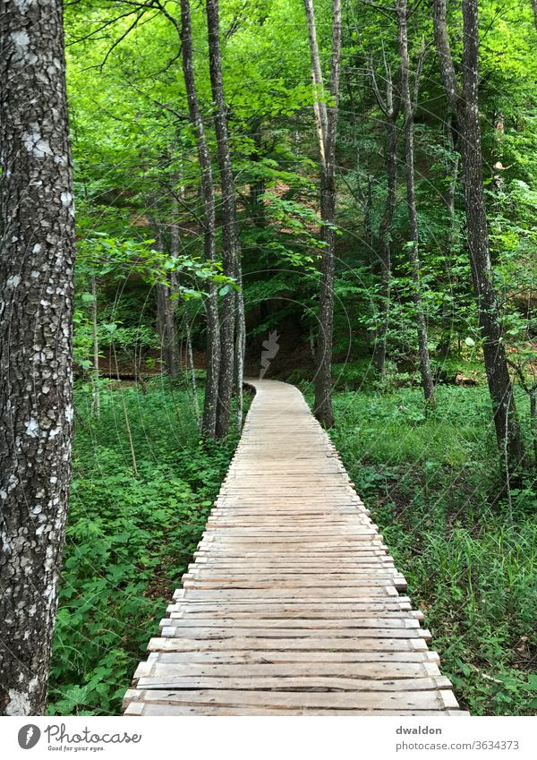 elevated wooden path through the forest Forest Footbridge Croatia Lonely Loneliness vacation green Lanes & trails off stroll walk Curve Street