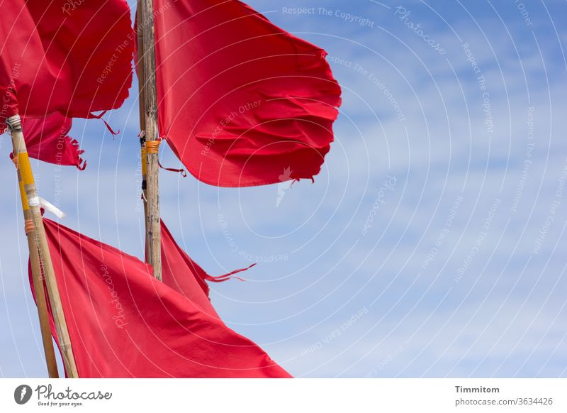 Fake poppy(tag) Flag flags Red Judder Wind Cloth Rod wood Sky Blue Clouds Flagpole Beautiful weather Vacation & Travel