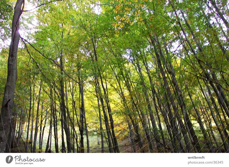 autumn forest Forest Tree Autumn Multicoloured Leaf Yellow Green Mountain Tree trunk Branch