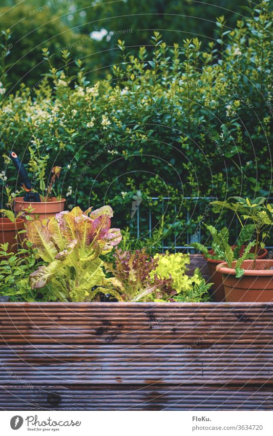 wooden raised bed with many pots and plants Garden Bed (Horticulture) Lettuce Nature wax do gardening food Eating Pot free time natural Hedge green Delicious