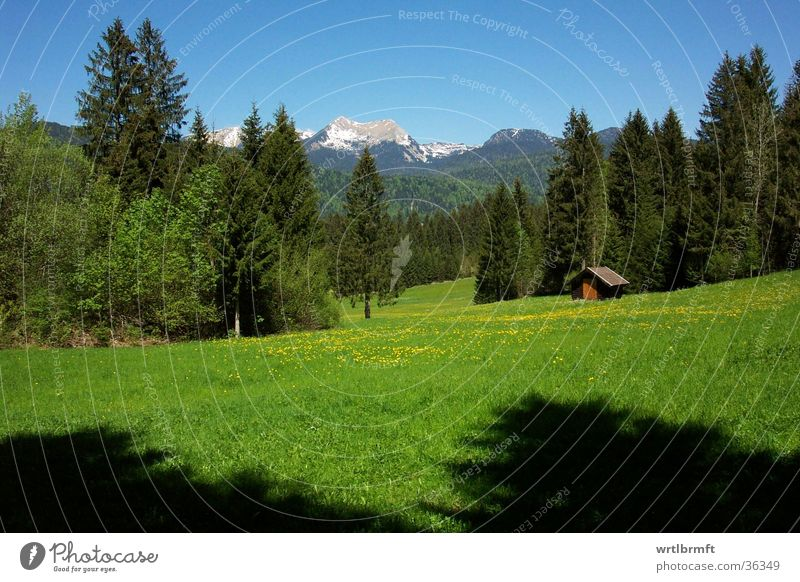 mountain scenery Vacation & Travel Trip Far-off places Freedom Summer Mountain Nature Landscape Spring Tree Meadow Forest Alps Peak Hut Blue Green Bavaria Glade