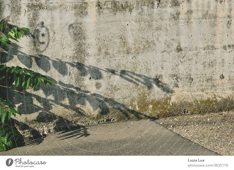 Green fronds and a smiley face on a concrete wall in the industrial area, the sun laughs above everything Concrete Wall (building) green Weed Smiley Shadow