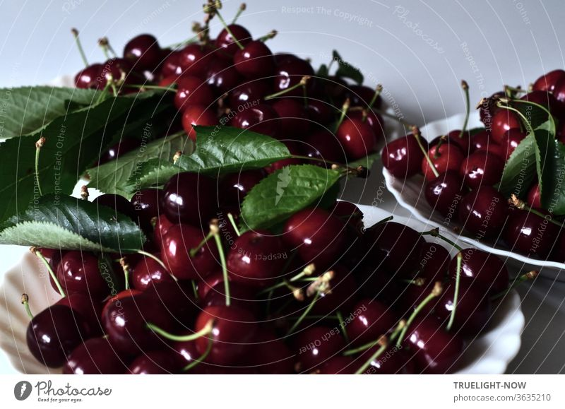 Fresh from the tree and picked by themselves, the thick, sweet, dark red cherries lie together with some green leaves on three plates, ready to be eaten Red