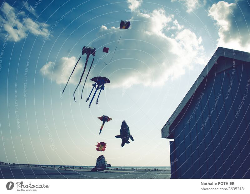 Kites on the beach kites Beach Sky seascape Clouds Clouds in the sky clouds sky flight holidays Exterior shot Colour photo Flying Horizon Wind Ocean Coast Water