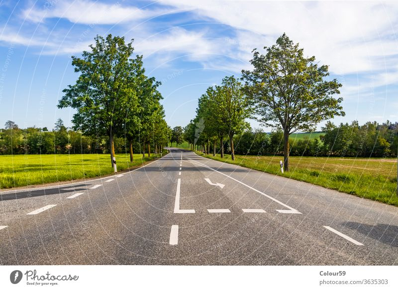 Country road with trees in summer country green nature landscape rural sky way travel trip grass asphalt empty scene view highway countryside field journey