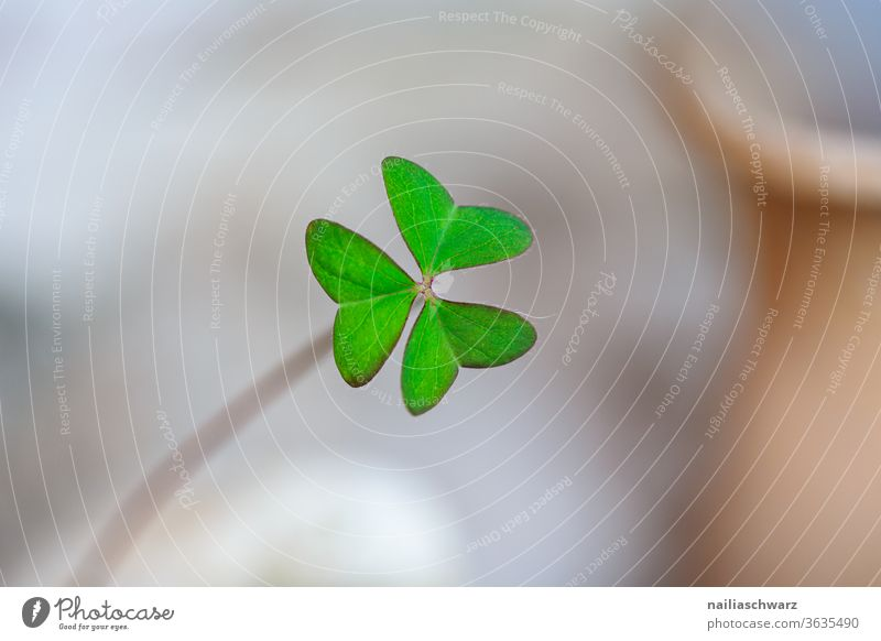 shamrock Cloverleaf flaked luck Good luck charm New Year's Eve Nature Plant Part of the plant green Colour Emotions Hope Religion and faith Four-leaved Life