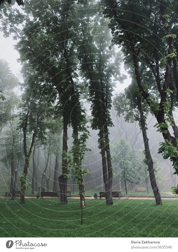 trees at the park in the early morning in the mist Park City haze fog Tree Trees foggy Morning Nature Spring Green solitude silence