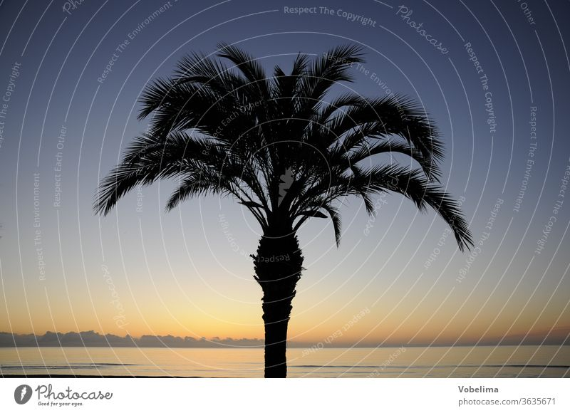 Palm tree at dawn Dawn Morning Sky Sun morning sky South Sunrise Ocean Coast Landscape Nature Individual romantic Picturesque Long distance travel Exotic