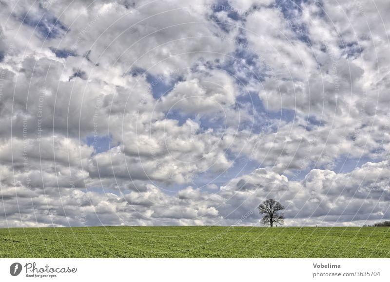Russian oak near Michelstadt russian oak michelstadt Odenwald Hesse Germany Europe tree Field acre Sky cloud Clouds cloudy sky Individual by oneself Lonely