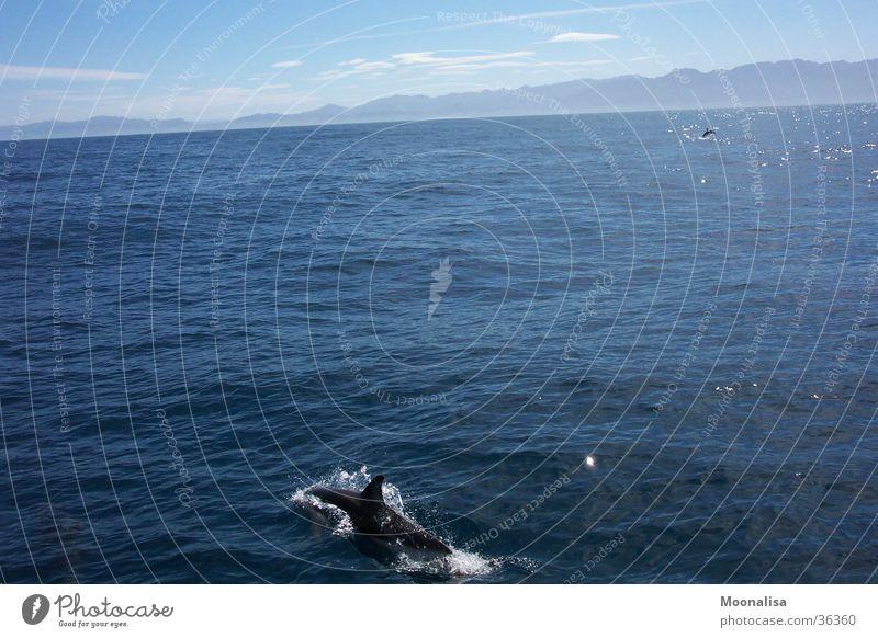 Dolphins Ocean New Zealand Water Watercraft ship tour