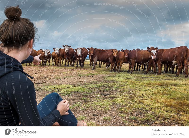 The young woman points to a particularly curious cow in the herd cattle Herd of cattle Cow Farm animal Animal Grass Meadow Sky Willow tree Agriculture
