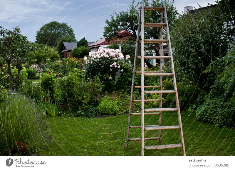 Ladder in the garden tree Berries flowers blossom bleed Relaxation holidays Garden Grass Sky Redcurrant cherries allotment Garden allotments Deserted Nature