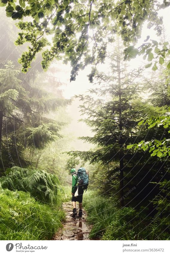 Man with backpack walks through rain in the forest. hikers outdoor Backpack trekking Hiking Young man Forest Rain Puddle tree Treetop Rain jacket Wet