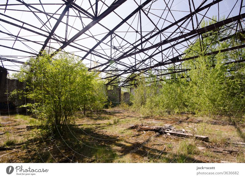 rusty dilapidated hangar with lots of fresh green inside Hangar lost places Deciduous tree Nature Transience Broken Architecture Old Decline Ravages of time