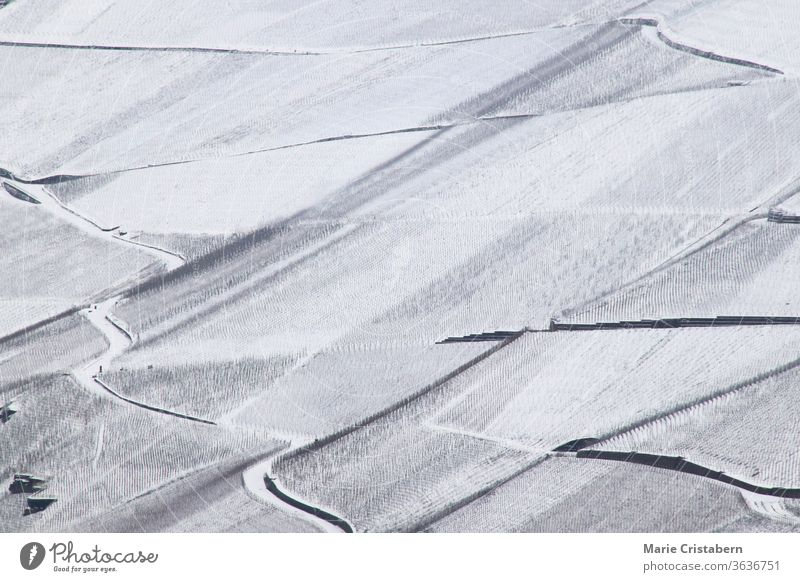 Vast snow vineyards in the mosel valley of Bernkastel-kues in Germany during the winter season German Vineyards Winter Snow covered mosel germany