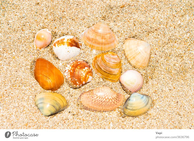 Sea shells on sand beach summer background marine sea texture tropical coast vacation nature ocean frame seashell starfish travel design seashore holiday