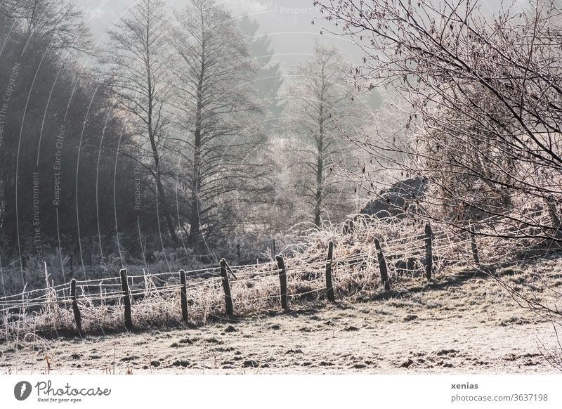 Winter is coming / In the winter wonderland there is a fence with snow and frost in front of winter trees Fence Snow Frost Nature Landscape huts Forest Freeze