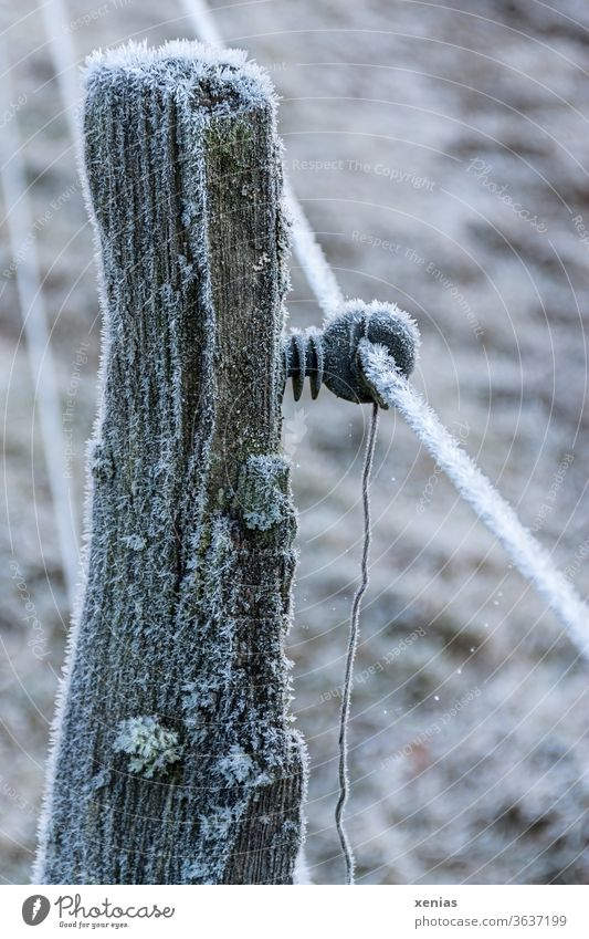 Wooden posts of an electric fence with hoarfrost in winter Fence Winter Electrified fence Hoar frost Ice Frozen Frost Snow Freeze chill wood Pole Ice crystal