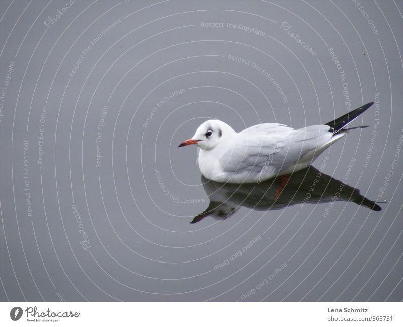 seagull Harmonious Relaxation Calm Freedom Environment Nature Animal Water River bank Bird Wing 1 Loneliness Idyll Moody Environmental protection Colour photo