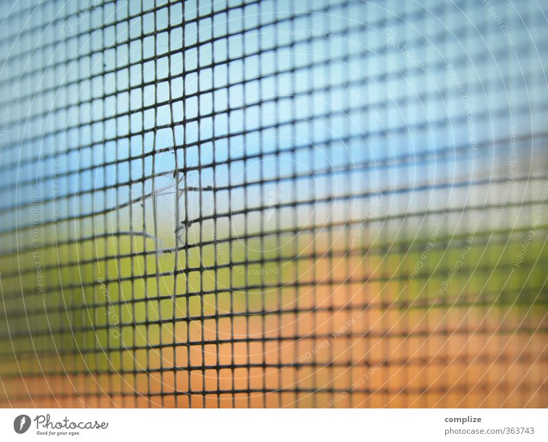 Fly screen without fly Animal Catch Flying Erupting Escape Net Crack & Rip & Tear Hollow Mosquitos Mosquito repellent Way out Colour photo Close-up Detail
