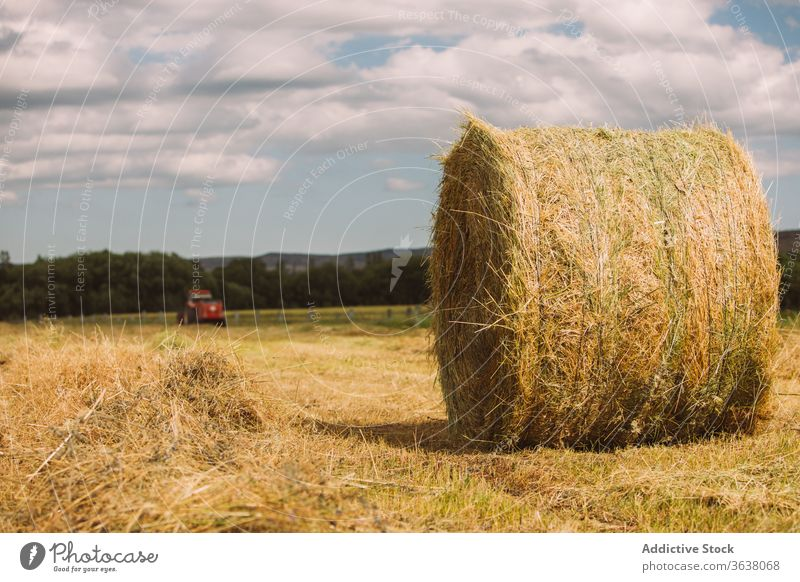 Hay roll on dry grass in field hay haystack harvest agriculture sunny dried nature rural summer idyllic landscape harmony cloud calm environment meadow cloudy