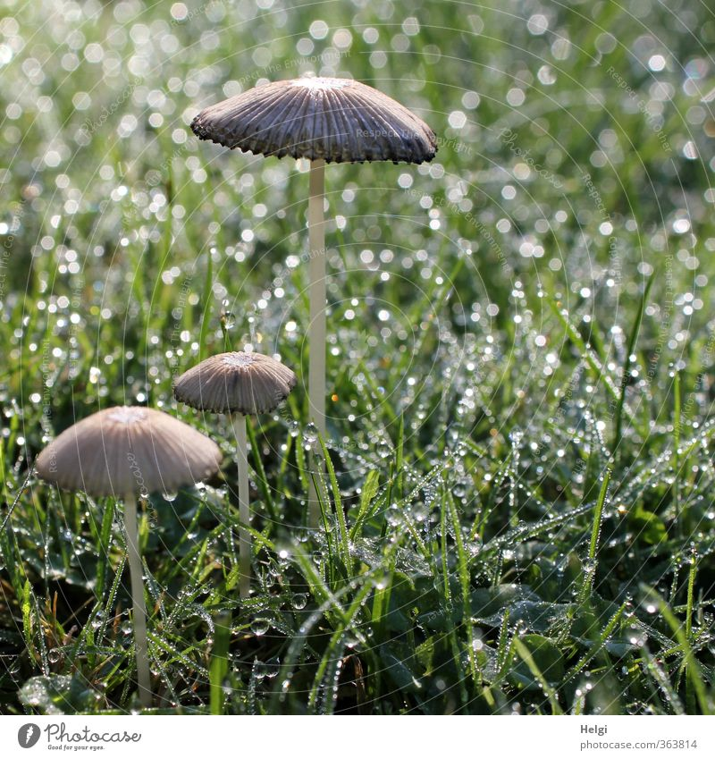 Cuddle group. Wet-feet. Environment Nature Plant Drops of water Autumn Grass Foliage plant Mushroom Garden Glittering Stand Growth Esthetic Simple Small Natural