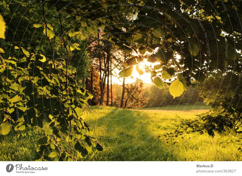 Summer at the edge of the forest Environment Nature Sunrise Sunset Sunlight Beautiful weather Tree Meadow Forest Warmth Soft Colour photo Exterior shot Evening