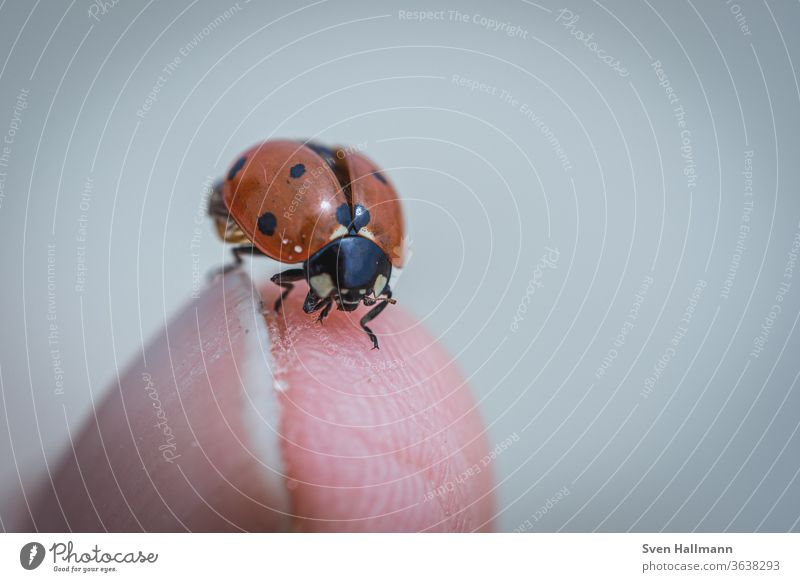ladybug on finger Contrast Detail Sky Central perspective Good luck charm Wake up Neutral Background Isolated Image Small Crawl Point Spring Colour photo