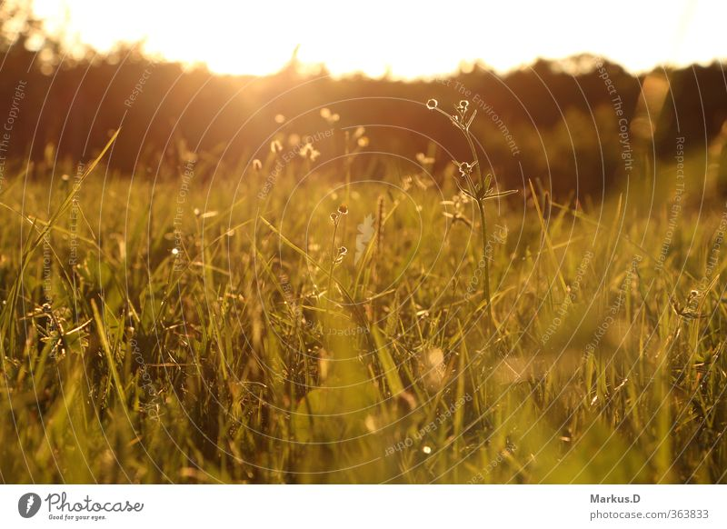 summer meadow Nature Landscape Sunrise Sunset Summer Beautiful weather Meadow Serene Happy Colour photo Exterior shot Evening Twilight Light Sunlight Back-light